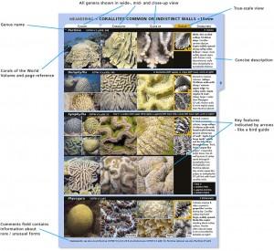 Coral Finder Demo Page
