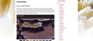 Coral Hub Acropora ID