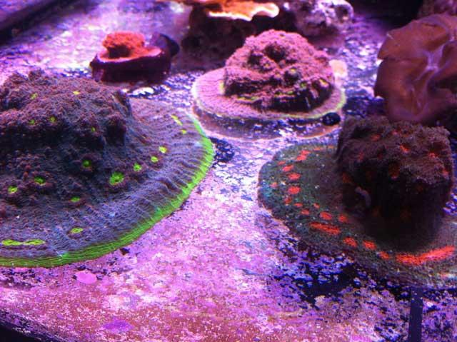 Coral Under Elos 14K Coral Metal Halide