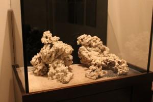 Pukani Dry Rock Aquascape