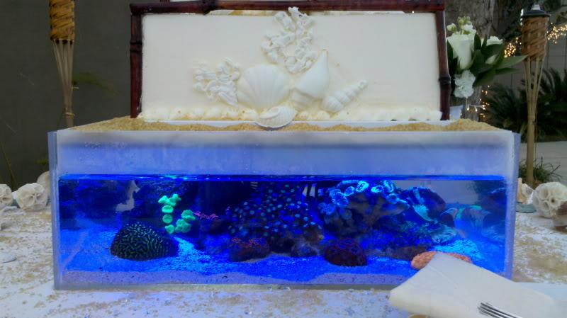 Reef Tank Wedding Cake Closeup