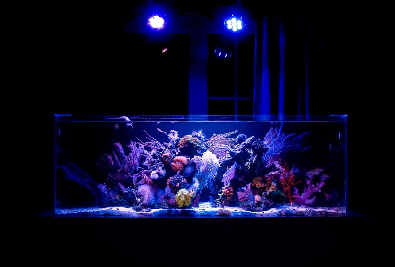 ATB Powered NPS Reef