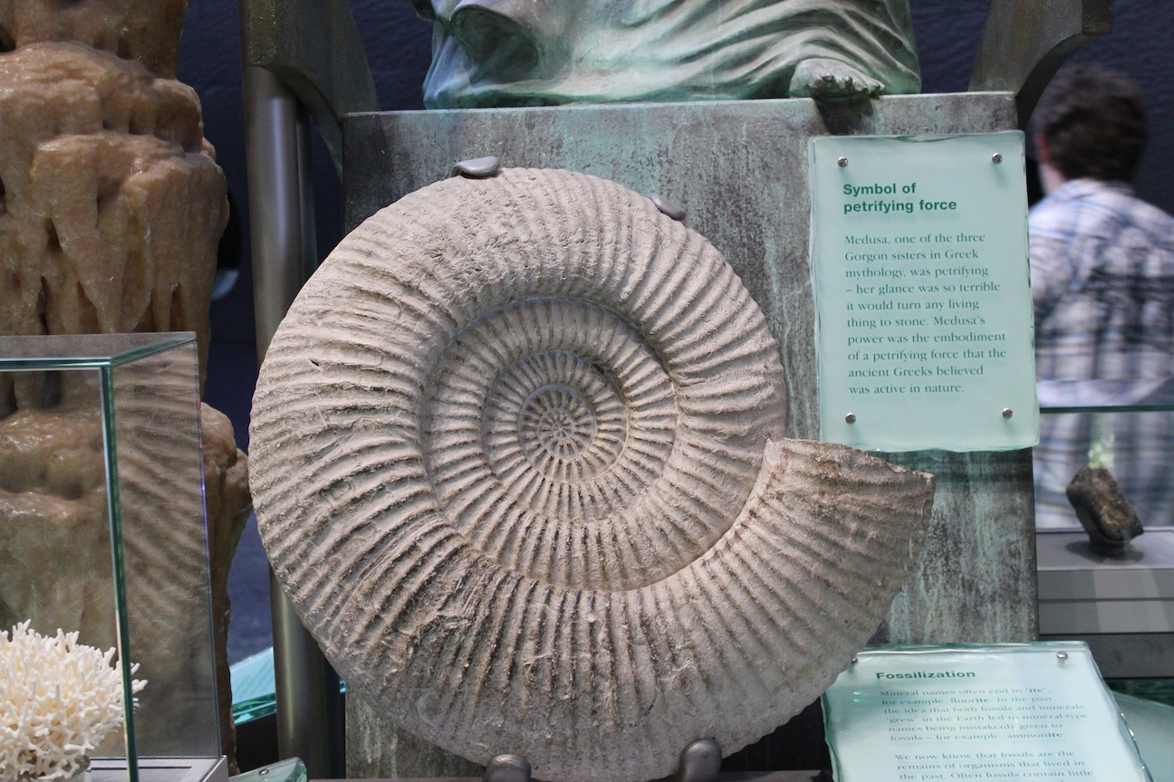 Ammonite Fossil London Museum of Natural Science