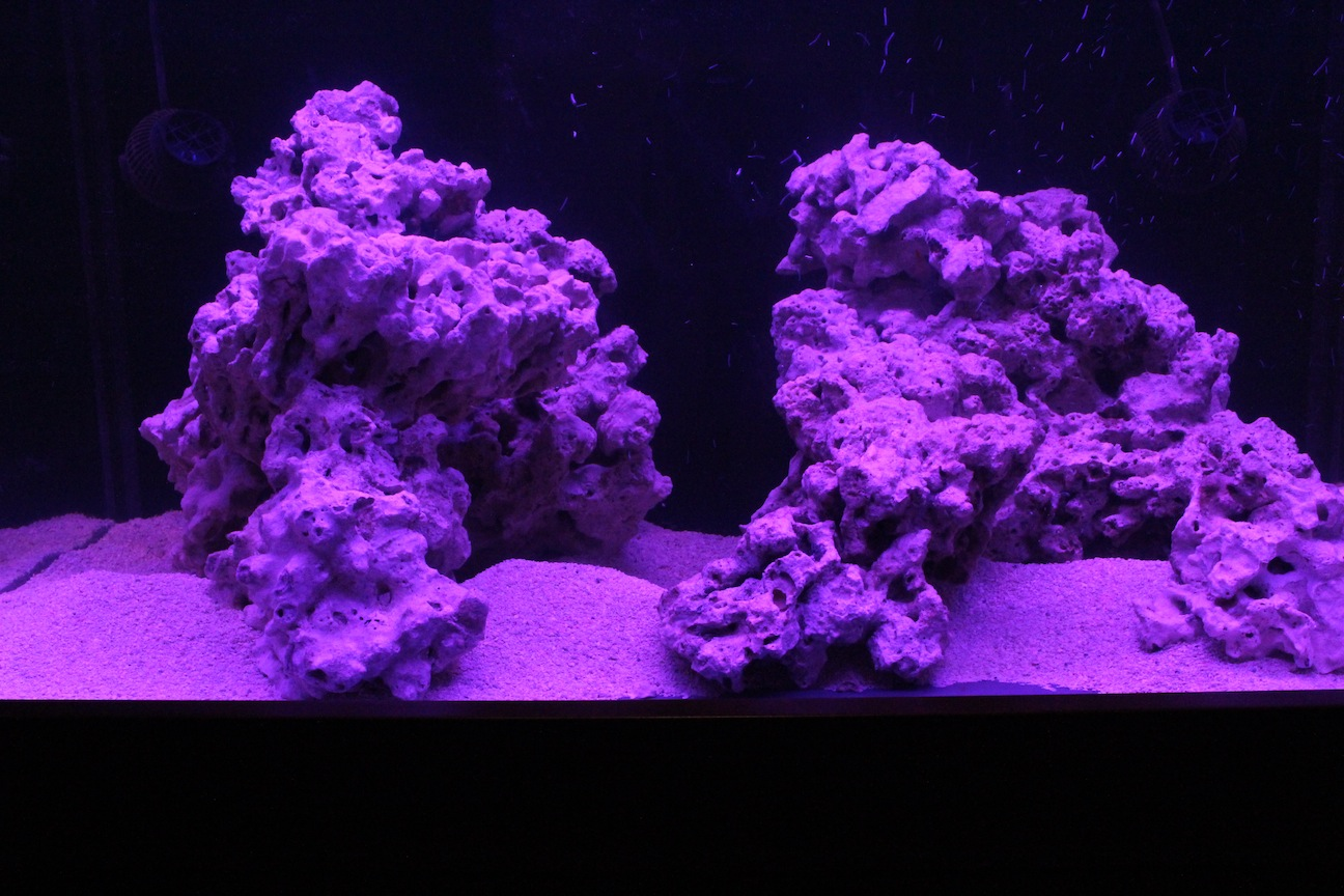Aquarium Under 453nm and Magenta Stunner Strips