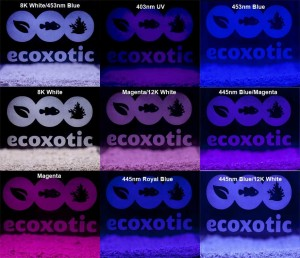 Ecoxotic Stunner Strip Colors