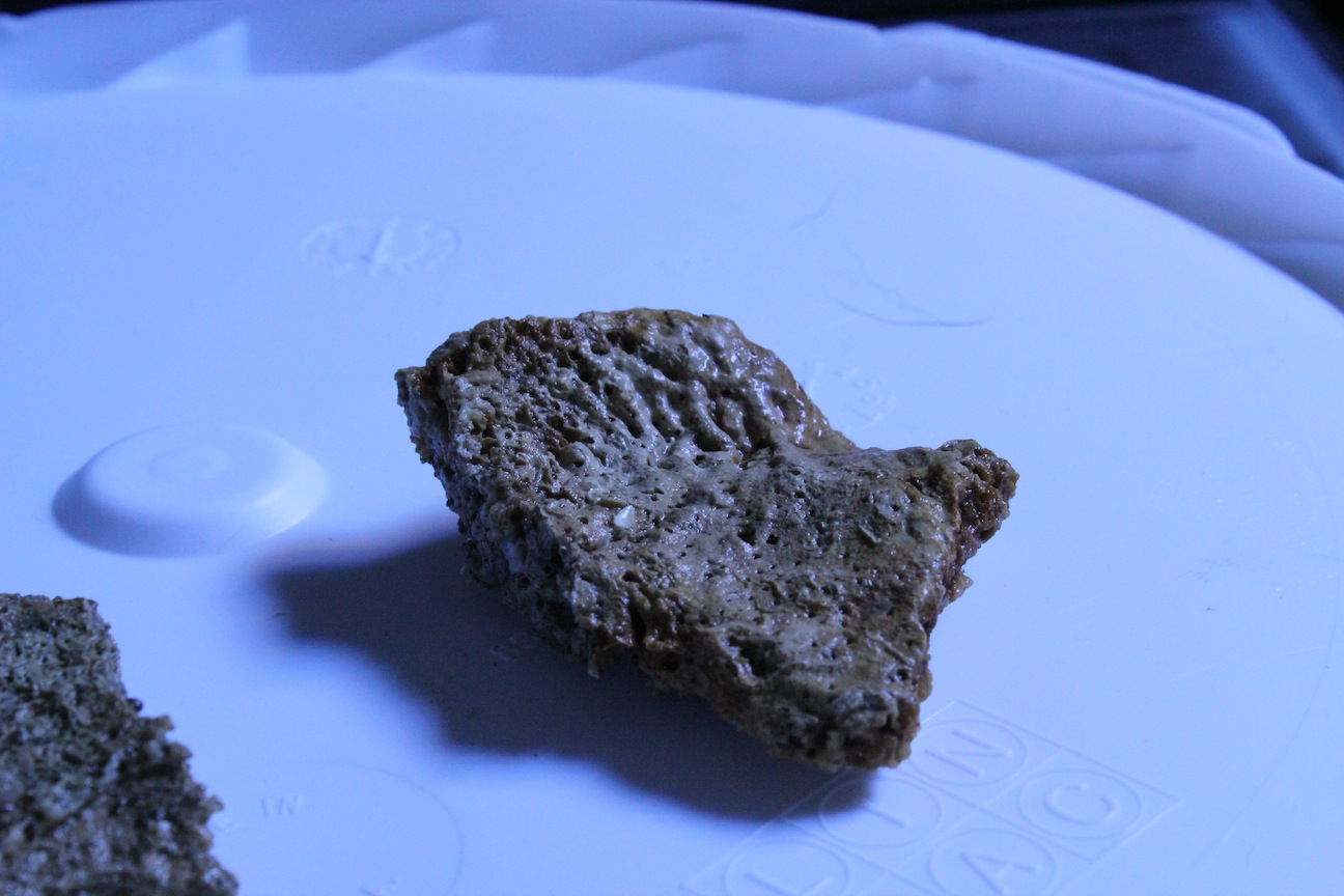 Flat Live Rock for Clam