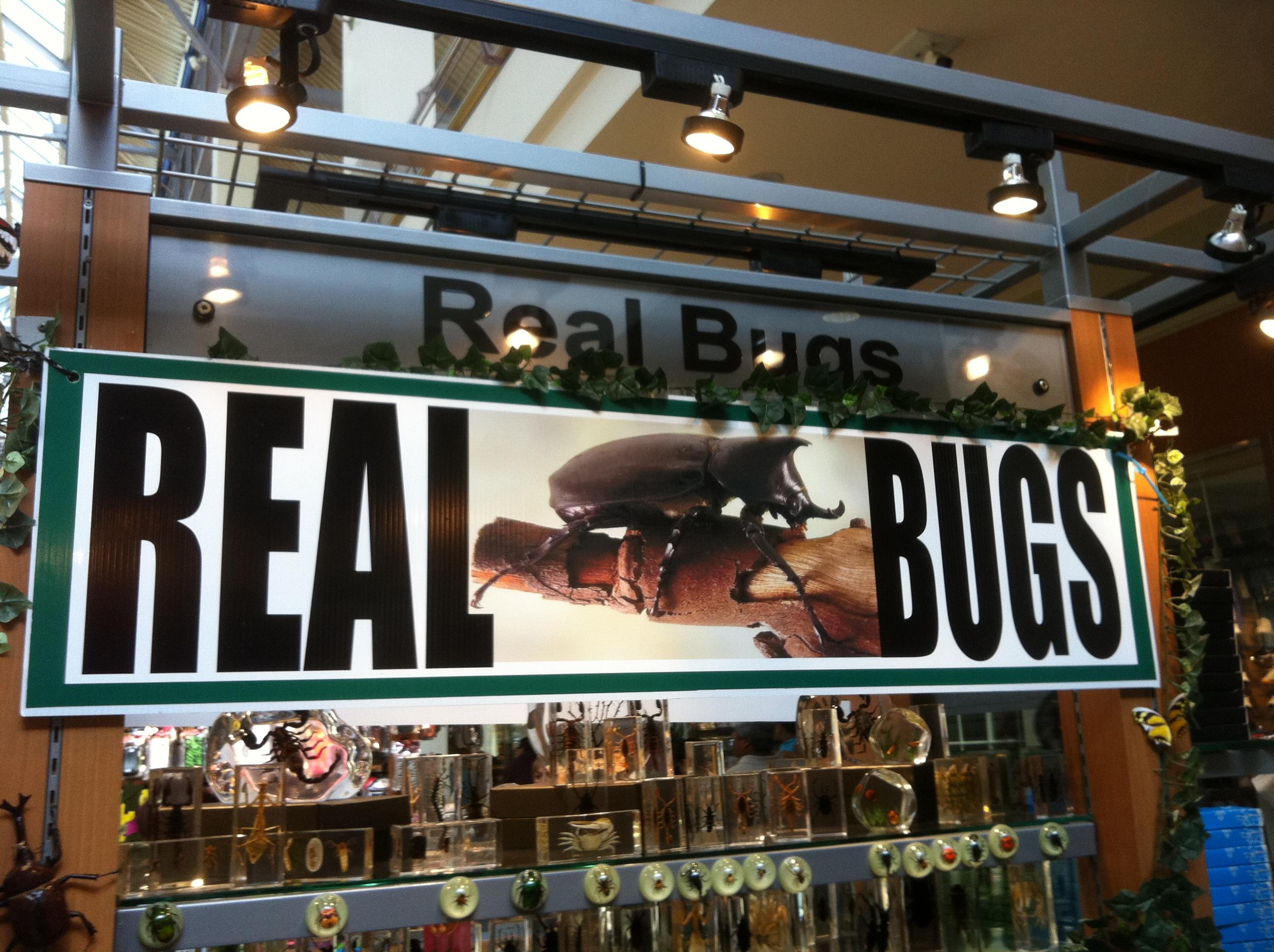 Real Bugs Kiosk