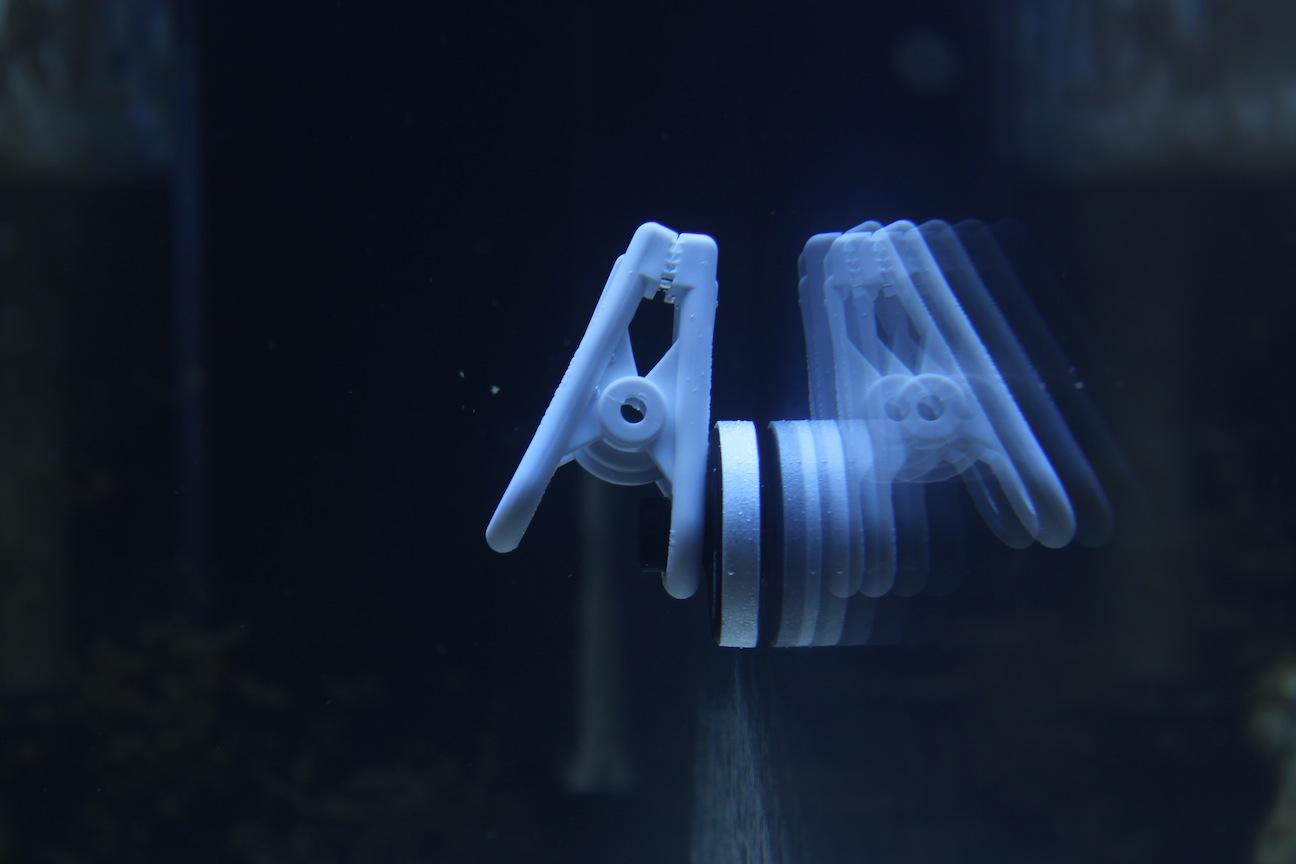 TLF Algae Magnet on Glass