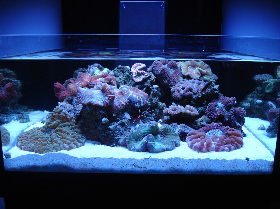 ADG Display Neo Nano Reef Tank