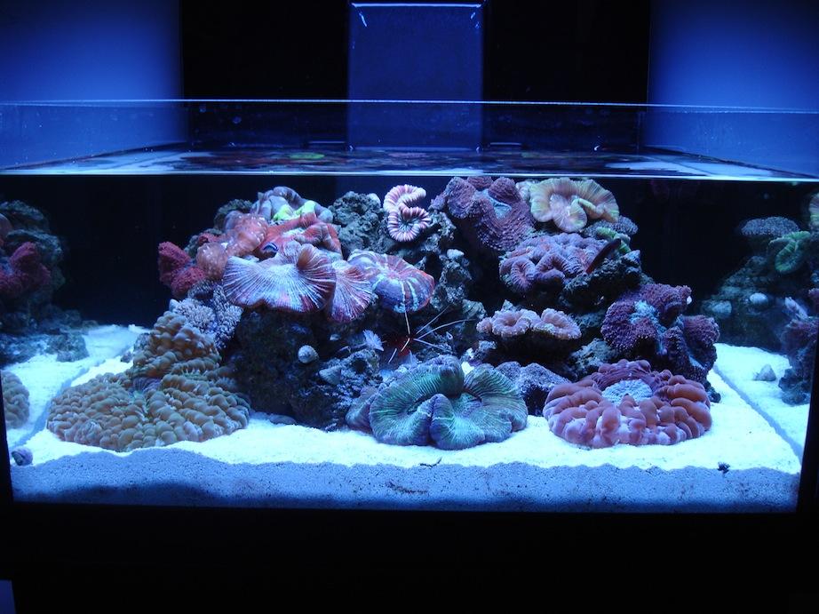 ADG Display Neo Nano Reef Tank