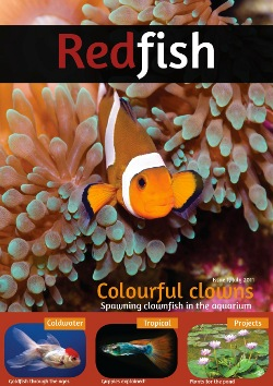 RedFish Magazine