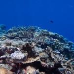 Pacific Ocean Reefs