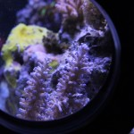 Coral with IVS Portal