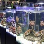 Eheim AquaStyle Aquarium