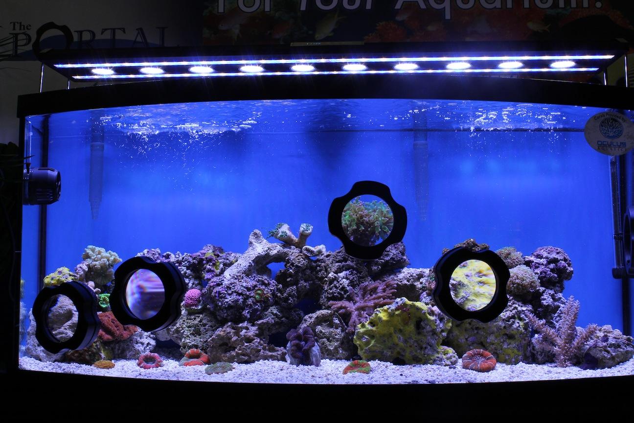 IVS Portal Display Tank