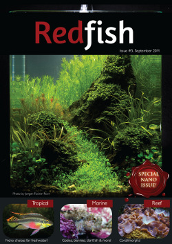 RedFish Magazine Issue 3