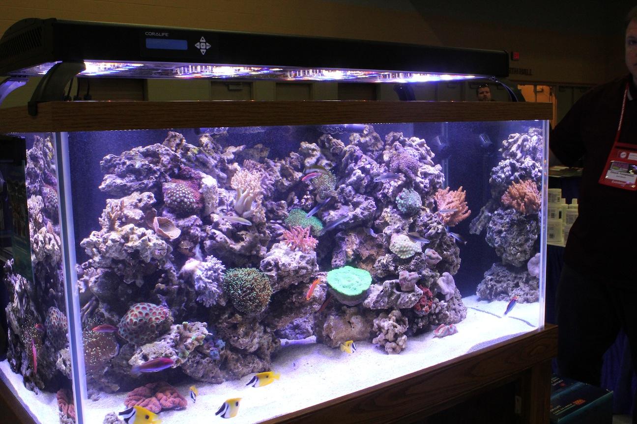 Reef Under Coralife LED Aqualight