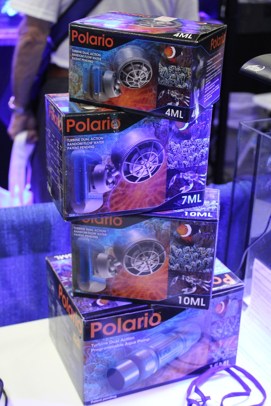 Taam Polario Lineup