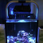 Nano Under Maxspect Mazarra