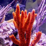 Orange Finger Sponge