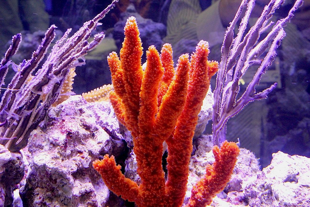 Orange Finger Sponge