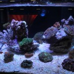 Reef Display Under Mazarra LED