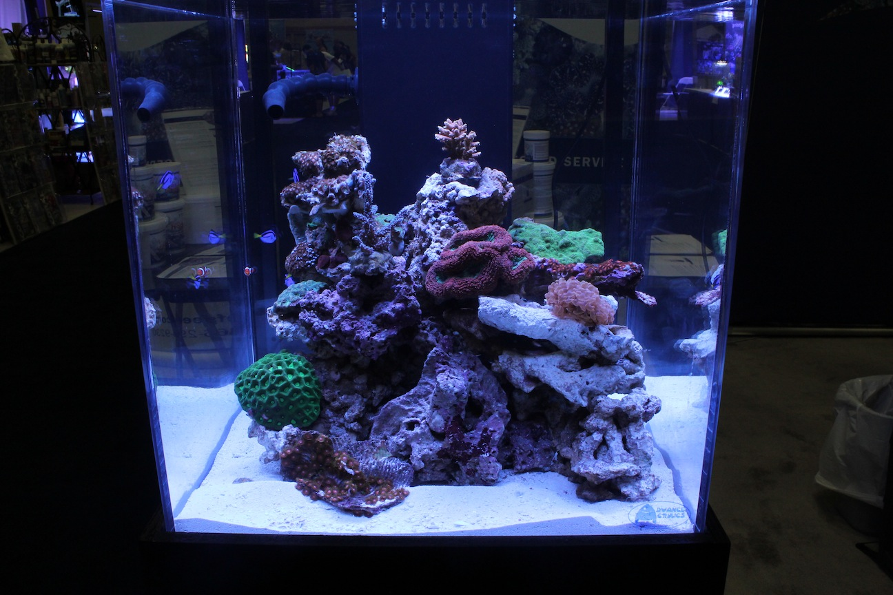 Reef Tank Under ATI Dimmable Sunpower