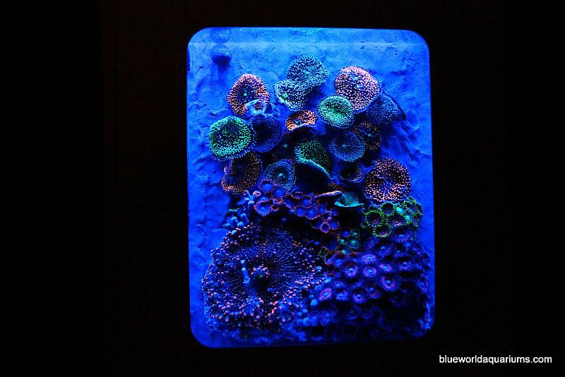 Aquarium Inside Xbox 360