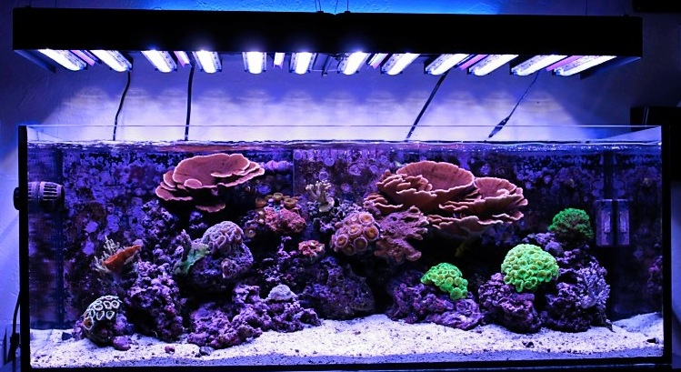 Ecoxotic panorama led reef tank after for Saltwater fish tank lights