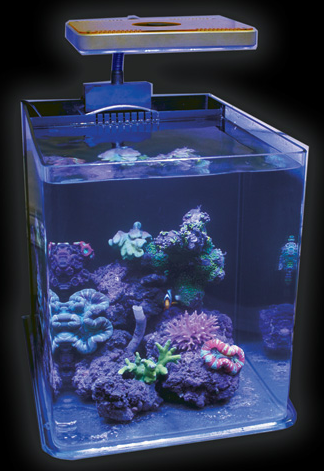 New rimless nano cube rl coming from jbj aquanerd for Cube saltwater fish tank