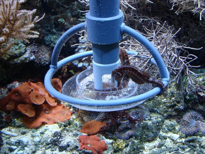 ATB Seahorse Feeder