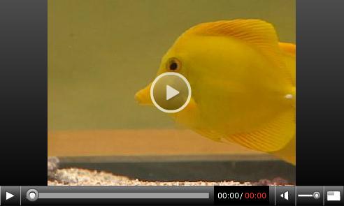 Proposed Limits on Aquarium Collecting