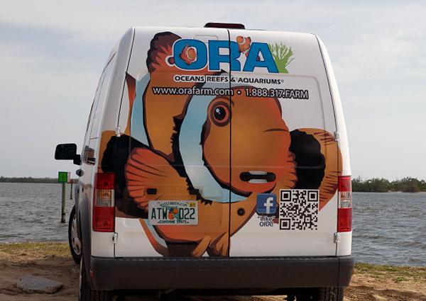 ORA Clownfish Van Back