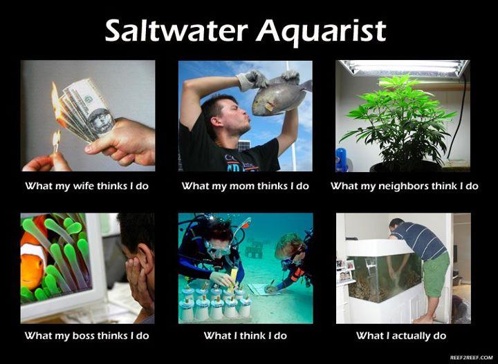 Saltwater Aquarist Meme