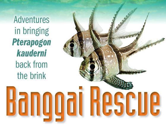 Banggai Rescue