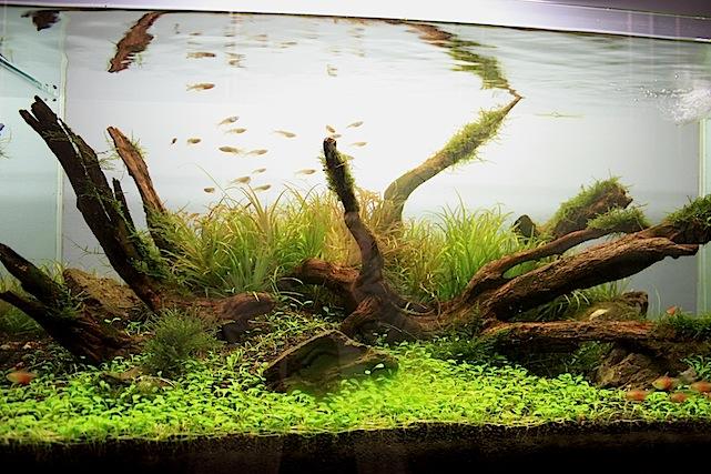 Freshwater Planted ADA Aquarium