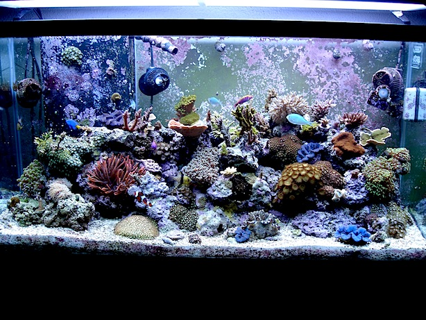 Mature Mixed Reef Aquarium