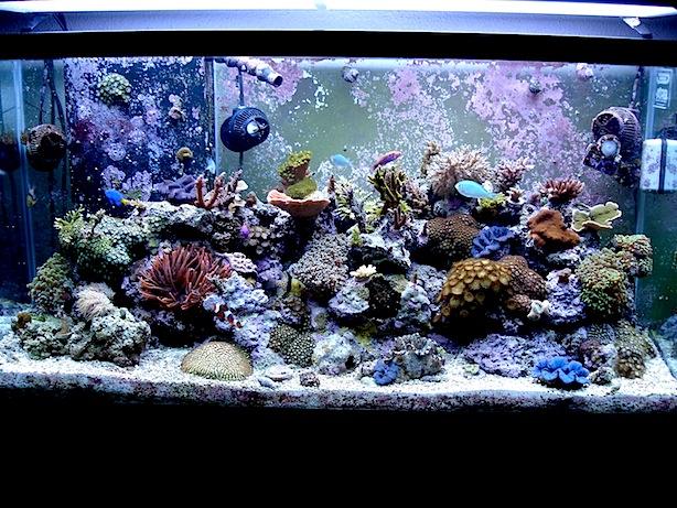 Mature Mixed Reef Aquarium