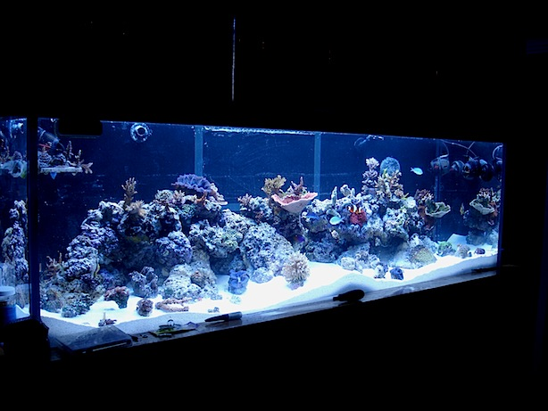 Young Reef Aquarium