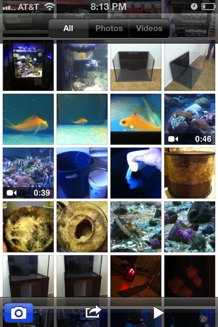 Aquarium Nerd Cell Phone Photo Gallery