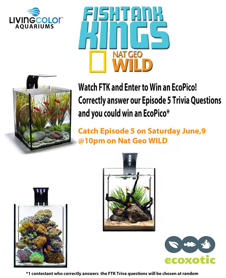 Watch Fish Tank Kings, Win an Ecoxotic EcoPico Aquarium | AquaNerd