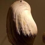 Fossilized Bivalve