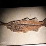 Fossilized Fish Choking