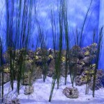 Seagrass Tank at Moody Gardens
