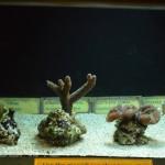 Coral Aquaculture - Waikiki Aquarium