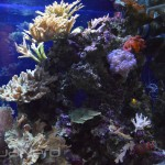 Mixed Reef Display - Waikiki Aquarium