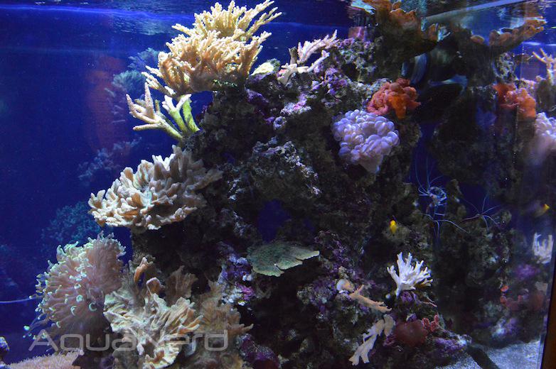 Mixed Reef Display - Waikiki Aquarium