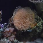 Soft Coral Display - Waikiki Aquarium