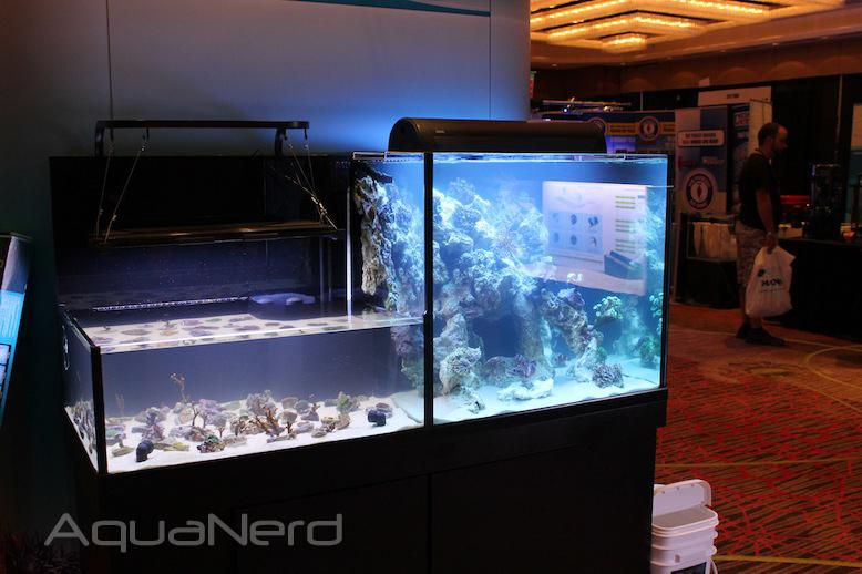 Deep Sea Aquatics Dual Level Aquarium