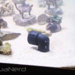 Deep Sea Aquatics Return